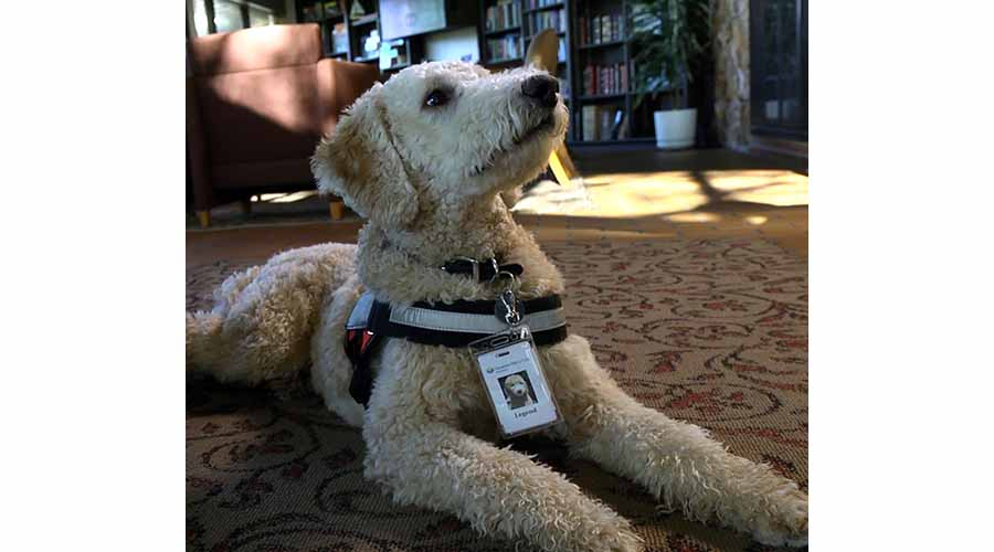 Legend - Therapy Dog at the Dan Anderson Renewal Center in Center City, MN