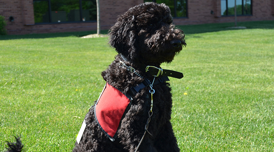 Roland - Therapy Dog at Center City, MN Campus