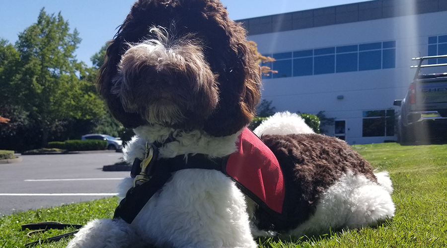 Rory, animal-assisted treatment dog